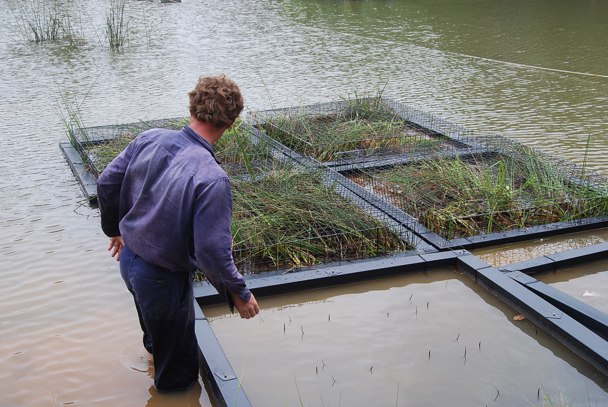 Campbelltown City Council Floating Wetland Trial