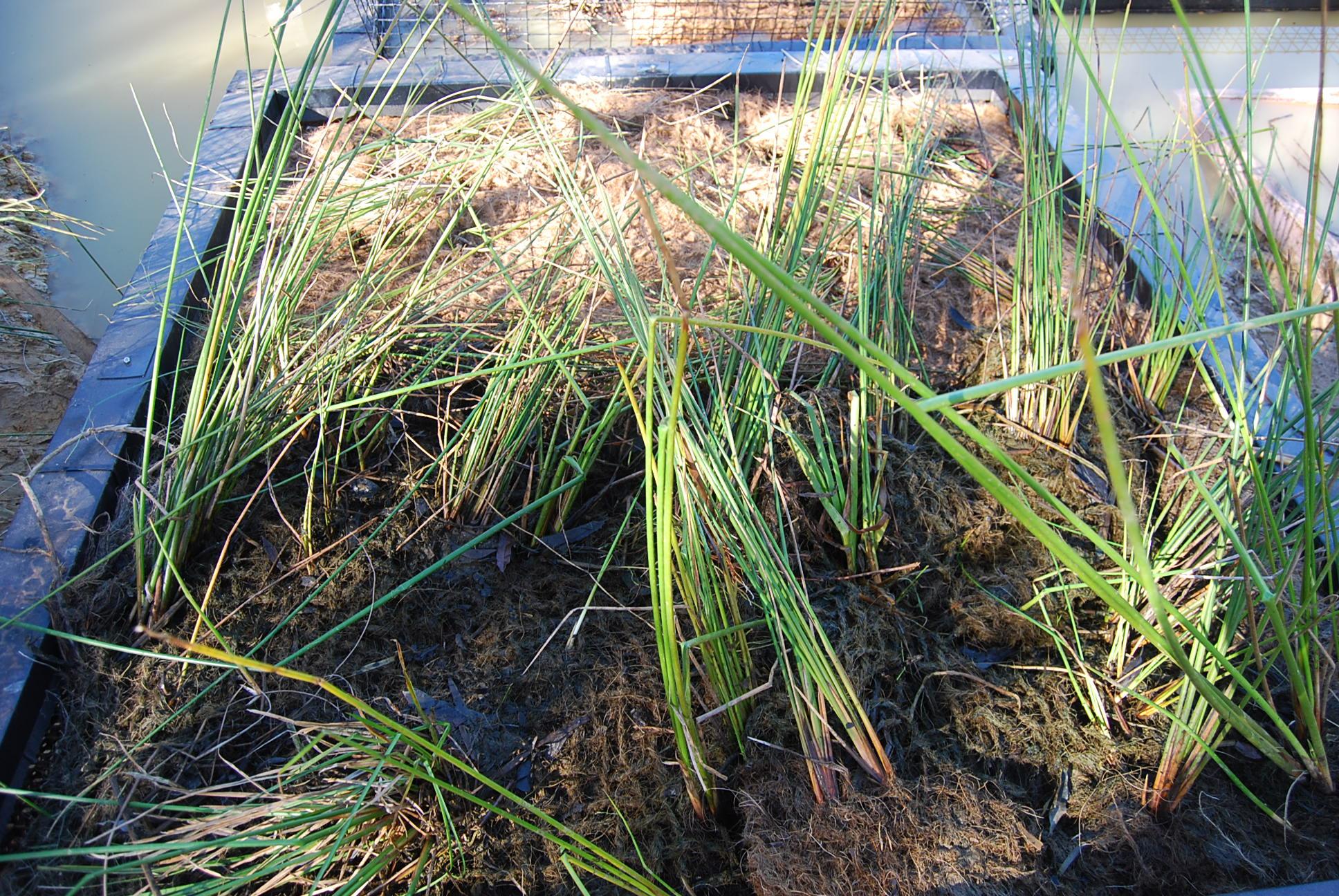 Angus Creek Storm Water Harvesting